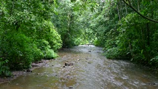 National Park Costa Rica River Stream Jungle Rainforest Forest Nature