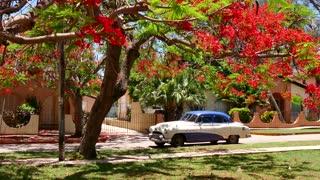 Old Vintage Cuban Car 1950s 50s Under Tree Varadero Cuba