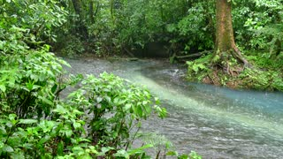 Rain Storm Jungle Stream Tenorio Volcano National Park Costa Rica