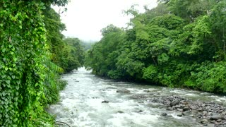 Rapids River Rain Nature Jungle Rainforest Costa Rica Central America