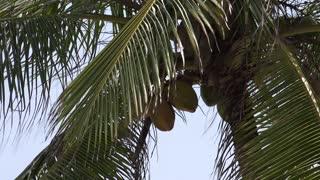 San Blas Islands Panama Central America-7