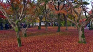 Tofukuji or Tofuku-ji temple in Kyoto, Japan, Asia. Tourists, crowd, pilgrims, people visiting its park during fall season to see autumn foliage on trees