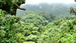 Trees Forest Canopy Jungle Rainforest Monteverde National Park Landscape Fog