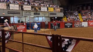 American cowboy doing calf roping or tie-down roping at rodeo in Cowtown Coliseum, arena in the stockyards of Forth Worth, Texas, United States of America. Black man and animal at show