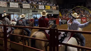 American cowboys doing team roping at rodeo in Cowtown Coliseum, arena in the stockyards of Forth Worth, Texas, United States of America. Men and animal at show