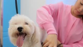 Animal Health And Hygiene For Clean Dog In Pet Shop