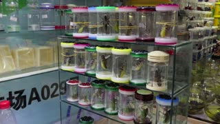 Chinese shop selling Asian animals, fauna, exotic insects, crickets as pets in Shanghai, China, Asia