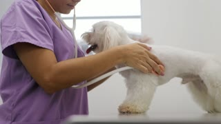 Doctor Visit In Clinic With Veterinary And White Dog