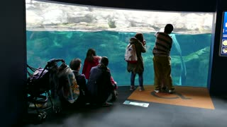 Dolphins, sea animals swimming in marine water tank, underwater life. People, tourists, visitors at Osaka Aquarium, Japan, Asia