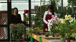 Girl at work as sales manager in floral shop, selling flowers, talking to client shopping in flower store. Worker helping customer who is asking for assistance and suggestion while buying a plant