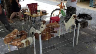 Makeshift shop selling animals, pets, dogs, puppies on a sidewalk of Guilin, China, Asia