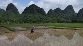 Man working as peasant in paddy field, planting rice plants in Yangshuo countryside, Guangxi, China, Asia. Chinese farmer at work. Chinese agriculture, farming, rural landscape