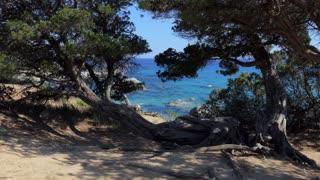 Natural landscape in Italy. Italian coast in Sardinia on Mediterranean Sea. Beach, trees, nature and flora in Porto Sa Ruxi, Villasimius, Sardegna, Italia
