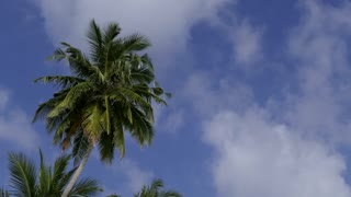 Palm trees with clouds passing over tropical blu sky. Copy space. Concept of travel, island, beach, holidays, vacations, tropics. Time lapse