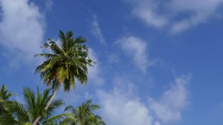 Palm trees with clouds passing over tropical blu sky. Copy space. Concept of travel, island, beach, holidays, vacations, tropics