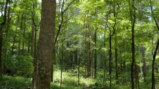 Pristine forest near downtown Jackson, Mississippi, United States with trees, branches, leaves. American natural landscape