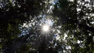 Sun beams through canopy of pristine forest near downtown Jackson, Mississippi, United States with trees, branches, leaves. American natural landscape