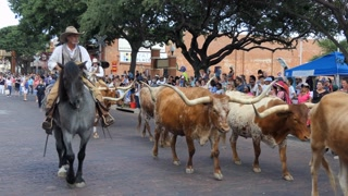 The Fort Worth Stockyards, a historic district in Fort Worth, Texas, United States of America. Cowboys riding horses and driving cattle for tourists