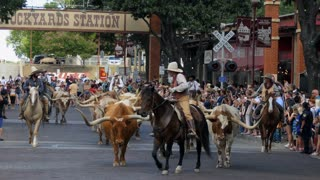 The Fort Worth Stockyards, a historic district in Fort Worth, Texas, USA. Cowboys riding horses and driving livestock for a tourist show