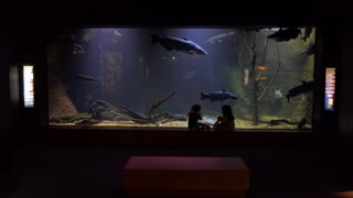 The MDWFP Museum of Natural Science in Jackson, Mississippi, United States. Kids looking at diorama of Pearl River natural environment with fish swimming