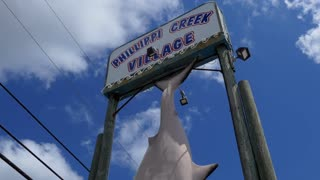 Trophy of great white shark caught in Phillippi Creek near Sarasota, Florida, United States on November 14th, 1998