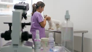 Veterinary Visit In Clinic With Vet And Sick Dog
