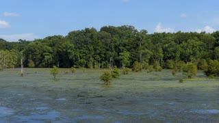 View of Chicot State Park near Ville Platte in Louisiana, USA. Wilderness landscape in the United States, American wild area with pond and trees
