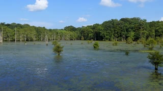 View of Chicot State Park near Ville Platte in Louisiana, USA. Wilderness landscape in the United States, American wild place with lake and forest