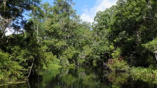 View of Edward Ball Wakulla Springs State Park in Florida, USA. Wilderness landscape in the United States, American wild places with quiet river and dense forest