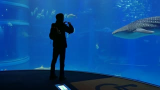 Whale shark, sharks, fish, stingrays, sea animals swimming in marine water tank, underwater life. People, tourists, visitors at Osaka Aquarium, Japan, Asia