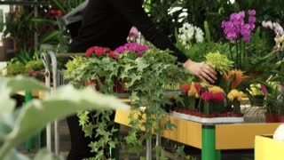 Woman as customer shopping in florist shop, buying flowers for hobby and gardening. Young person walking in flower shop, portrait of client looking at camera. Happy girl smiling in greenhouse
