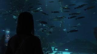 Woman Tourist Taking Picture Of Fishes In Aquarium De Barcelona