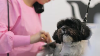 Woman Working In Pet Shop And Grooming Dog For Beauty