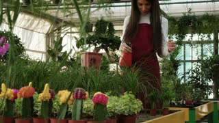 Young people working as sales manager in floral shop, watering flowers and plants. Portrait of woman at work, smiling in flower store. Worker girl as small business owner in greenhouse