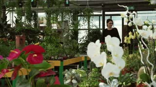 Young woman as customer shopping in florist shop, buying flowers for hobby and gardening. People walking in flower shop, client pushing cart and choosing plants. Happy buyer in greenhouse