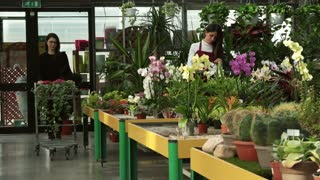 Young woman working as seller in floral shop, selling flowers, talking to client shopping in flower store. Worker helping customer who is asking for assistance and advice while buying plants