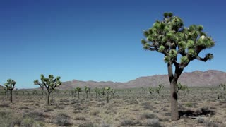View of Joshua Tree National Park, Mojave Desert, California, United States of America, USA. Sequence