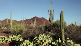 View of Saguaro National Park, Sonoran Desert, Arizona, United States of America, USA. Sequence