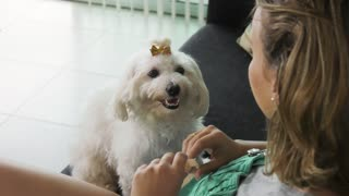 Woman Dog Owner Putting Flea Collar To Pet