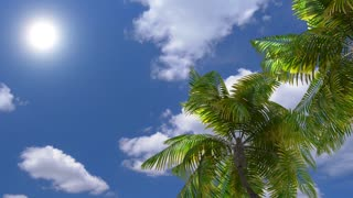 Air travel on the sea, palm trees, beach, relaxation