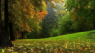 Autumn falling leaves isolated on green alpha background