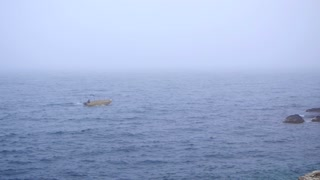 Fog on the sea and a man in a boat