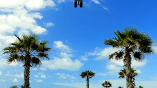 The plane flies over the palm trees, travel weekend