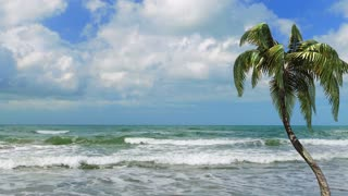 Tropical beach landscape with palm tree