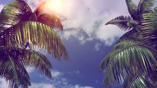 Branches of palm trees swaying in the wind