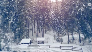 New-year forest in the snow. Christmas