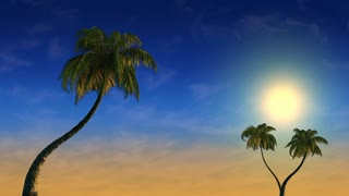 Sunset and palm trees in the wind, 3d animation