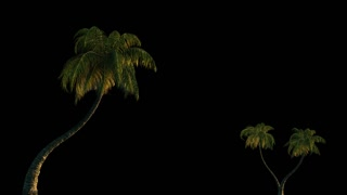 Three palm trees in the wind, 3d animation with alpha channel. File format- mov, codec PNG+Alpha