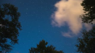 2 in 1 video! The forest view from the bottom by sky with stars and bright clouds. Time lapse capture