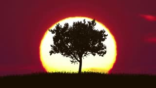 2 in 1 video! The tree against the background of sunrise. Time lapse. Wide angle